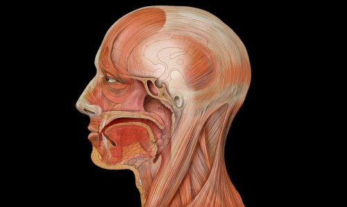 Curso de Especialização em Prótese Dental - Anatomia